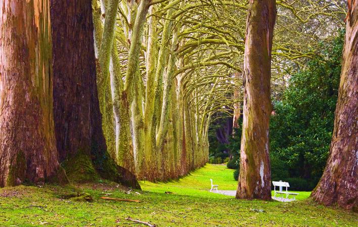 Jardin Botanico De Gijon Adultos 2 90 Ninos Guia Turismo Asturias
