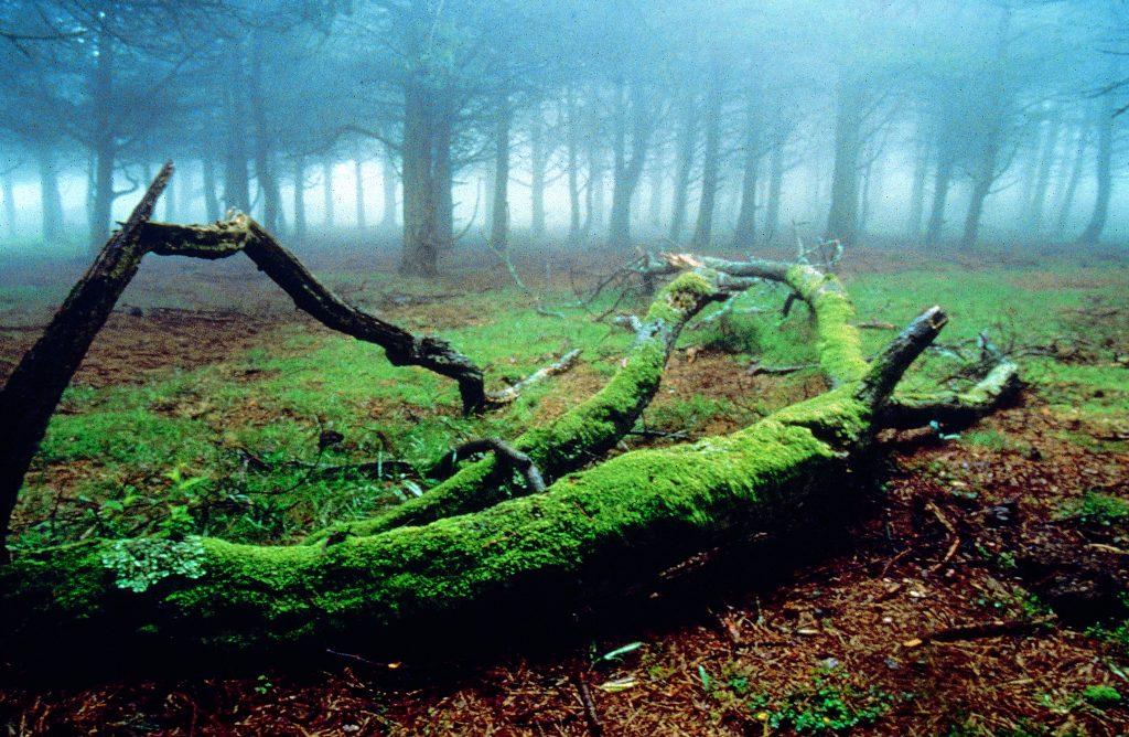 El cambio clim tico en asturias en qu nos est - Marisquerias en asturias ...