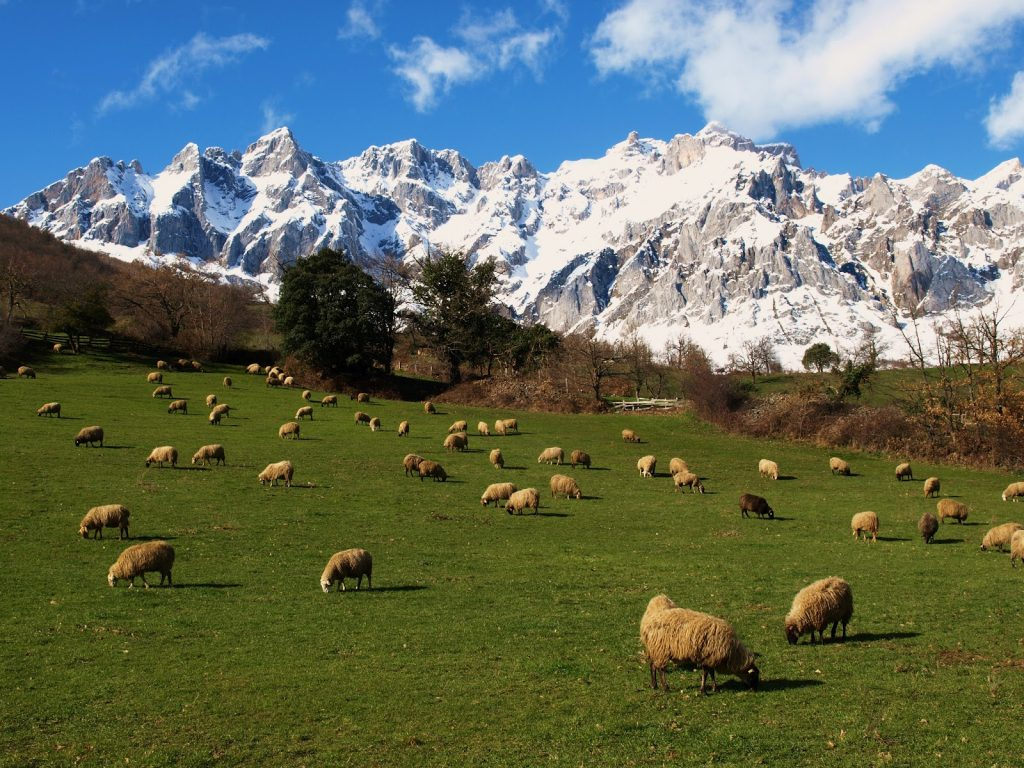 Picos de europa qu poco tienen para ver gu a - Marisquerias en asturias ...
