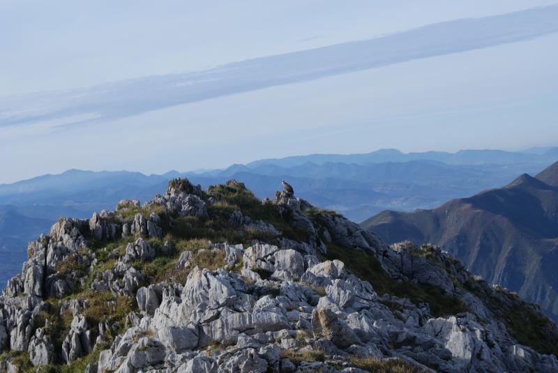 Imagen exp 8 gu a turismo asturias - Marisquerias en asturias ...
